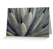 Agave Thorns -Cactus Macro, Natural Pattern h Greeting Card