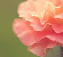Vintage Rose by Beve Brown-Clark