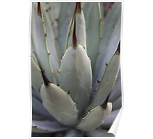 Agave Thorns -Cactus Macro, Natural Pattern Poster