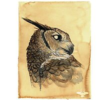 Blind - Owl Photographic Print