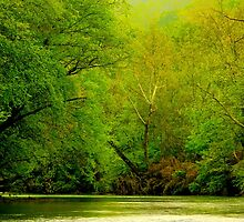 Springtime Down On The River by NatureGreeting Cards ©ccwri