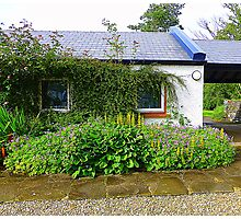 An Irish Cottage Photographic Print