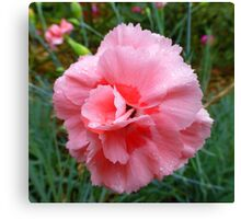 The Rain Soaked Carnation Canvas Print