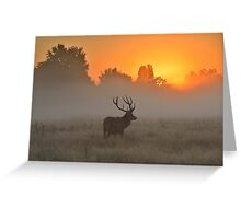 Marvelling at the Rising Sun Greeting Card