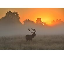 Marvelling at the Rising Sun Photographic Print