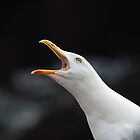 A Very Vocal Gull by Anne Gilbert