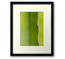 Fresh green Cactus Macro - Yellow / Green Framed Print