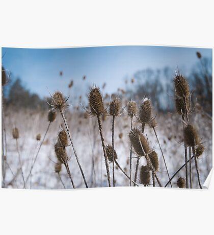 Spiky Things in Snowy Field Poster