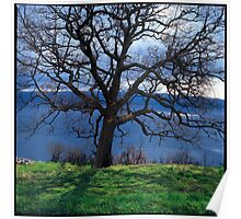 Leafless oak tree above the Mediteranian sea Poster