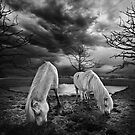 To graze on barren ground by Adrian Donoghue