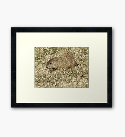 Groundhog days Framed Print