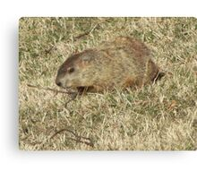 Groundhog days Canvas Print