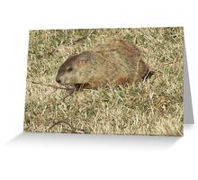Groundhog days Greeting Card