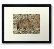 rooting around Framed Print
