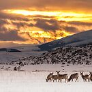 Deer at Sunset by Jason Thomas