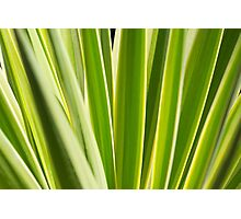Nature Pattern, Palm leafs - Green, yellow stripes Design Photographic Print