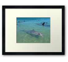 Dolphins Galore Framed Print