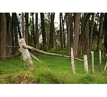 Barbed Wire Fence Among Trees Photographic Print