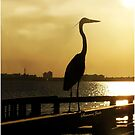 Heron Silhouette ~ iPhone Case by SummerJade