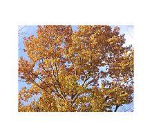 Autumn in RI by ALNemic