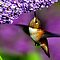 Hummingbirds with Flowers
