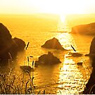 beautiful sunset over the virgin rock with wild tall grass by morrbyte