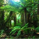 Rainforest New Zealand by Imi Koetz
