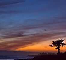 Cypress tree at sunset- Santa Cruz by David Chesluk