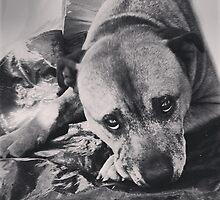 Mans Best Friend by StormSageRain