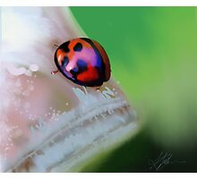 Ladybird on Leaf painting Photographic Print