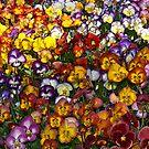 Field of Joy by Nira Dabush
