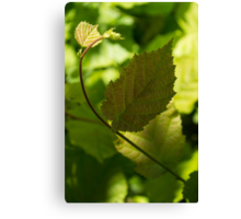 Hazel Leaves - New Life in the Springtime Forest Canvas Print