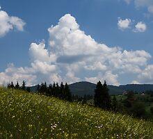 Lush Wildflower Meadow in the Mountains by Georgia Mizuleva