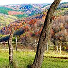 Old Trees in an Autumn Setting in Romania by Dennis Melling