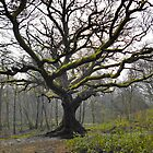 The Great Oak by relayer51