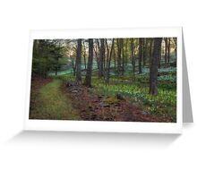 Path to the Daffodils Greeting Card