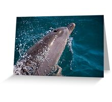 Dolphin bow riding  Greeting Card