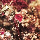 The Tiniest Rose (Lepidolite) by Stephanie Bateman-Graham