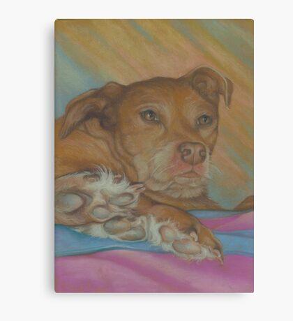 Furry Feet Canvas Print