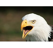 Chirping Bald Eagle Photographic Print