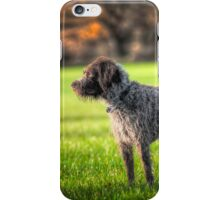 German wirehaired pointer iPhone Case/Skin
