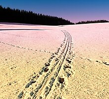 Cross country skiing | Winter wonderland | Landscape photography by Patrick Jobst