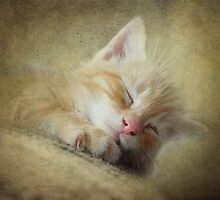 Soft Kitty, Warm Kitty, Little Ball of Fur by vigor