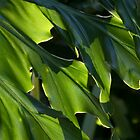 Sunlit Green Foliage (Philodendron selloum) by Kerryn Madsen-Pietsch