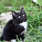 Curious Kitty by AbigailJoy