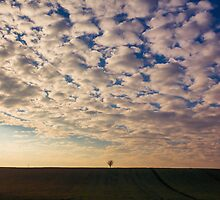 Lonely tree by Zsolt-Tibor Szabo