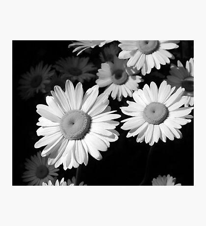 Sunning Photographic Print