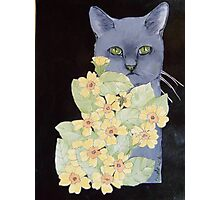Cat against black with flowers Photographic Print