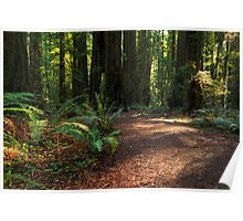 A Path In The Redwoods Poster