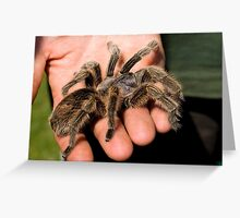 Chilean Rose Tarantula Greeting Card